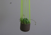 container gardens / by Lindiwe Coyne