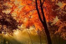 ~Fall~ / by Maureen M.