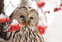 I Can't Stop Pinning OWLS / by allison