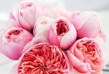 In Bloom / I love to look at flowers. Their beautiful colour and shape. Elegant and simple. Complex and intriguing. / by Susie Gray