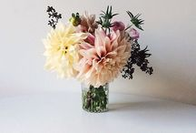 Floral & Fauna / by Juanna Hope Sia