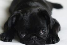 Pigz & Pugz / And the occasional cute bulldog / by Jen Roberts