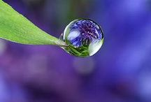 Kissed by Raindrops and Dewdrops / Dewdrops, Raindrops, Droplets-Nature  Photography / by Deborah G.