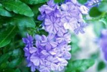 WELCOME!!  Scroll Through My Central Texas Garden / Gardening in Central Texas / by Deborah G.