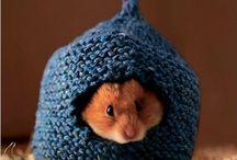 Hamster Info & Habitats / Hamster habitats, cages & general hamster info