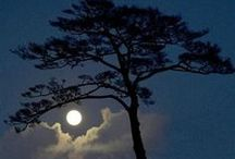 ♥  Tree Hugger♥ / Trees, Forests, Bark. Tree Seeds. Flowering and Unusual Trees / by Deborah G.