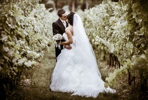 Wedding in Tuscany / Some wedding in tuscany's photos