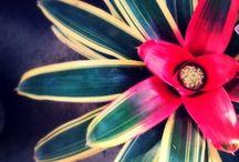 BROMELIAS / Las perfectas plantas para interior! / by Xochicali Vivero