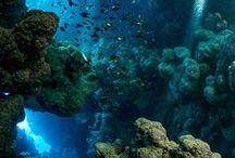 the deep-sea / θαλλασα και βυθος!!!