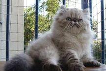 cats!!! / πανεμορφα γατια!!!