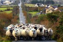 C O U N T Y G A L W A Y / WANDERLUST. IRELAND.