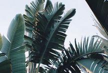Le Cactus et La Cia.