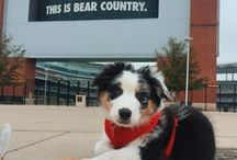 Baylor Pets / Just because Fido's a dog and Sir Whiskers is a cat doesn't mean they aren't really Bears at heart.