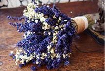 Lavender Bouquets / Fresh or dried - lavender always the most beautiful plant.