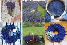 Lisie Pole / pics from our lavender farm in central Poland.