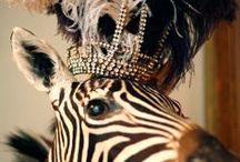 Skimpy Zebra / Zebra Print