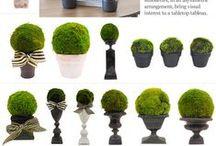 Topiary i Żywopłoty / topiary