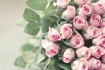 Ruusut: leikot ja ruukut