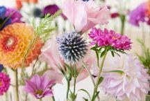 Color & Flowers