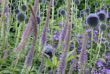 Garden - plant combinations (växtkombo)