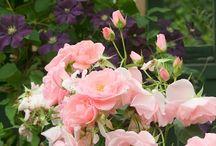 FLOWER GARDEN     / by Christine Leonard