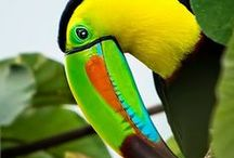 Tropical Baby / by Kelly Mothu