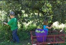 #2 Double M Farms/ McDowell Hunting Preserve / Family farm with U-pick/picked pears (mid July-mid Aug), Free-range eggs and Fruit stand open year round and self serve.  Upland gamebird hunting preserve of pheasants, chukar, and quail.  13161 Grand Island Rd. Walnut Grove, CA 95690 www.mcdowellestate.com