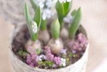 Frühling / Spring / Alles was den Frühling schöner macht
