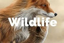 Wildlife / Photos of amazing wildlife from around the world