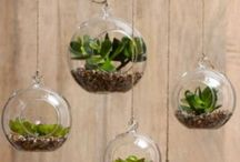 Glass Terrariums / Terrariums and plants in glass bowls