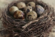 Easter, Nests, Eggs, Feathers and more