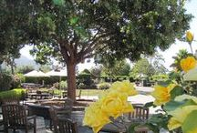Wine Garden / Wine tasting, tours, games, live music, and good times! Let us be the start to your next great story...