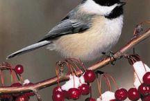 Birds, Eggs & Nests