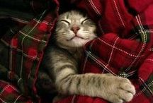 I'm a crazy catlady! / I love cats