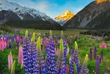 There's no place like home / New Zealand the most beautiful country in the world!
