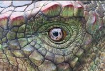 Huayangosaurus / Huayangosaurus