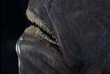 Himantolophidae groenlandica
