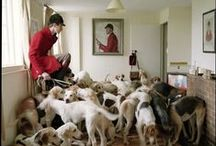 Le chien - gundogs & hounds / Parfois auxiliaire, parfois acteur principal ; c'est toujours magnifique de les voir travailler. Somtimes sidekick, sometimes main character ; always wonderful to see them at work