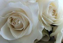 Море цветов / Мои любимые - белые пионы и белые розы