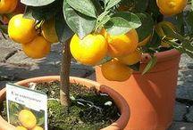 orto in vaso / frutta e verdura da coltivare in vaso