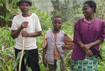 * Food Africa * / Food, farms and agriculture in Africa.