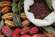 * Chocolate * / Cacao, Cocoa, Chocolate ~ all aspects of history, farming, harvesting, production, marketing, cooking with and health benefits of chocolate.  To learn more, see GR2Food's curated article collection @ http://gr2food.com/tag/cacao-cocoa-chocolate