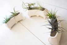 Gardening at The Granary / Bring the outdoors in with these easy to create gardens in your new apartment home