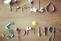 Frühlingsdeko / Dekoideen für den Frühling, Frühlingsdekoration, Tulpen, Narzissen, Deko mit Frühlingsblühern