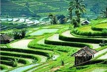 * Food & Farm - Asia * / Please visit us at GR2Food' Archives @ http://gr2food.com/category/asia/ to learn more about food, farms and agriculture in Asia. / by Margaret Carroll Boardman