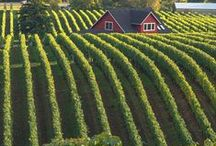 * Wineries of the World * / Wineries around the world + photos of wine and wine related products.  Please visit @GR2Food Archives @ http://gr2food.com/tag/wine/ to learn more about health, international trade, marketing, and agricultural issues related to wines and wineries around the world.