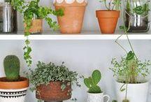 Urban Jungle - Wohnen mit Pflanzen / Plants / Pflanzen Einrichten mit Pflanzen, mit Pflanzen dekorieren