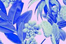 blues violets