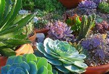Garden / Ideas to decorate your garden. ;) Ideias geniais para enfeitar seu jardim. ;)