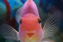 Animals : Ocean Paradise